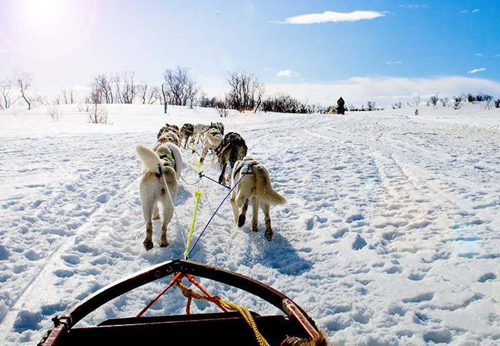 Spot On Sled Dogs 02 Norway Img 1