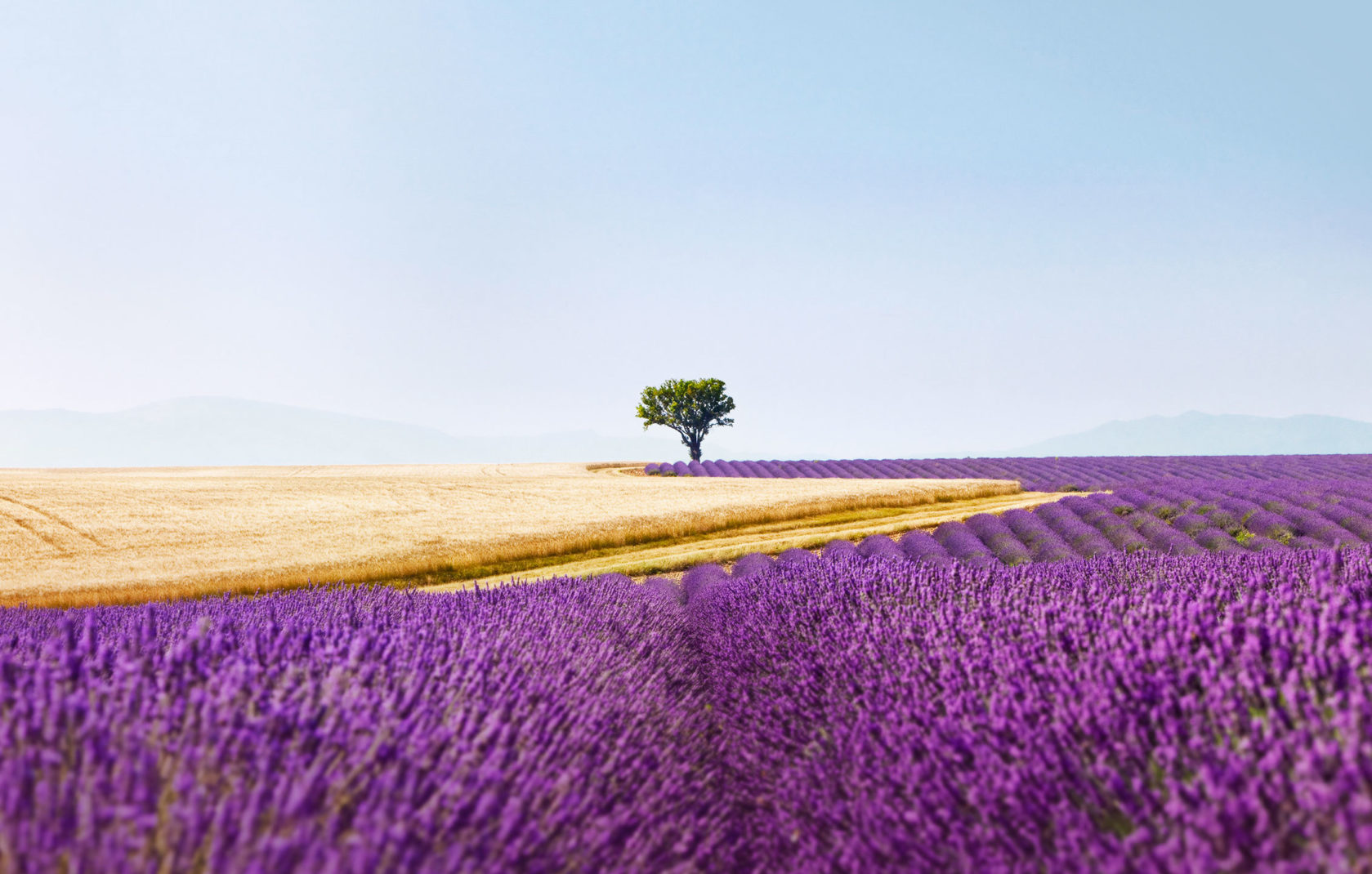 Spot On Lavendel Provence 01 Header