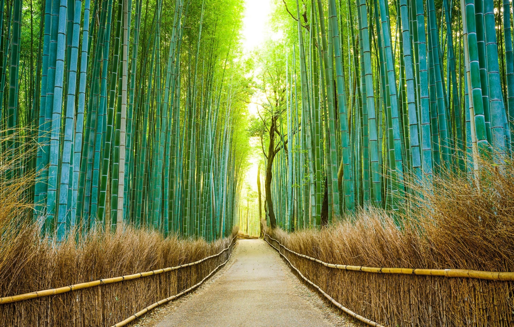 Top5 2018Special 07 Nr1 Bamboo Forest
